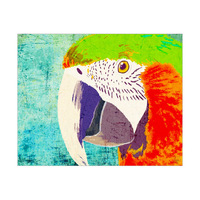 Grungy Macaw