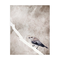 Painted Flycatcher Bird on Brown