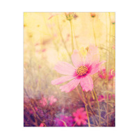Cosmos Flowers