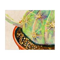 Big Cactus Omega