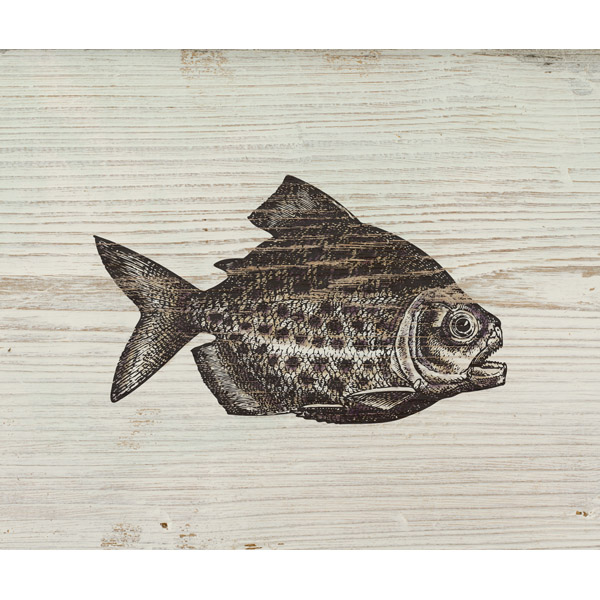 Rustic Piranha Brown