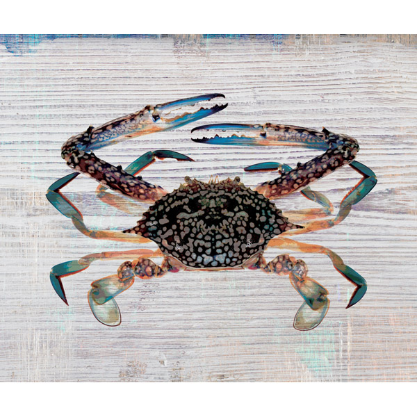 Tangelo Crab on Phthalo Plank