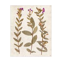 3 Dry Purple Periwinkle - Tan Paper