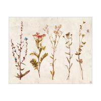 4S Dry Brown Flowers - Tan Paper
